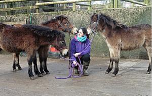 Exmoor Pony Centre