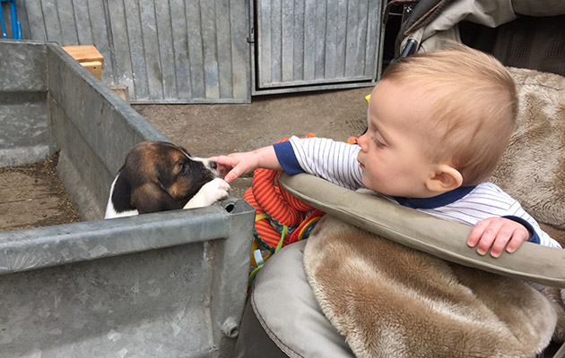 11 adorable hound puppy pictures to put a smile on your face