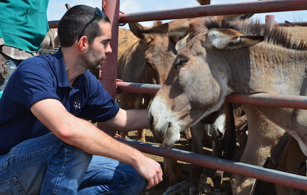 donkey skin trade