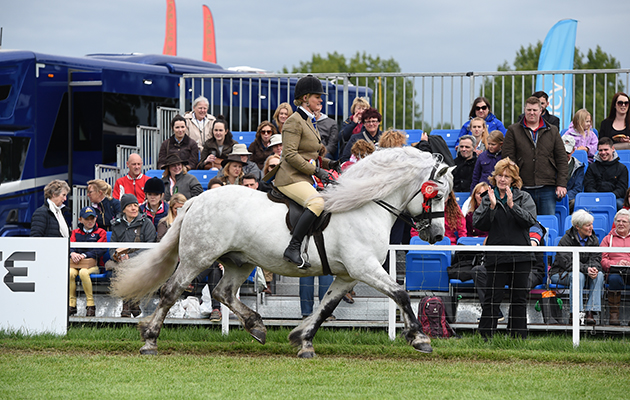 Harriet Dennison riding DUNEDIN DUNCAN, during the BSPS Heritage M & M Ridden Championship at the Royal Windsor Horse Show in the private grounds of Windsor Castle in Windsor in Berkshire in the UK between 10th-14th May 2017