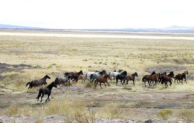 Now Trump wants to condemn wild horses to slaughter