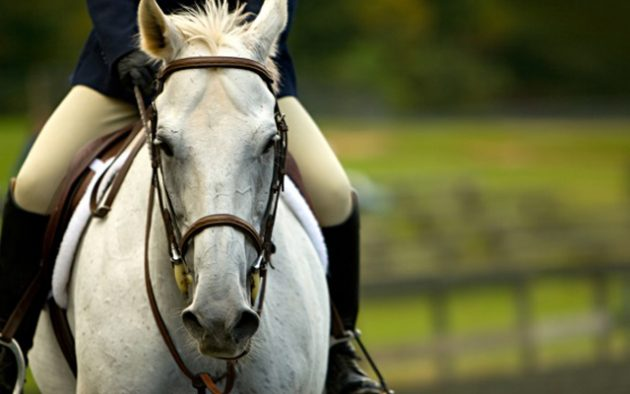 Petplan-Equine-Feature-image