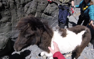 pony cliff rescue