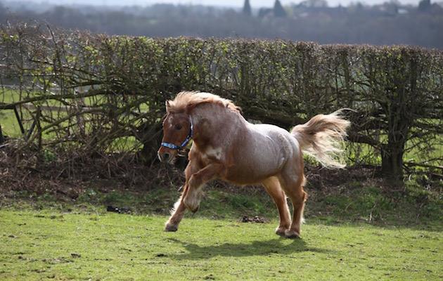 therapy pony dillon