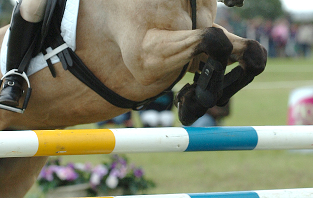 Showjumping legs