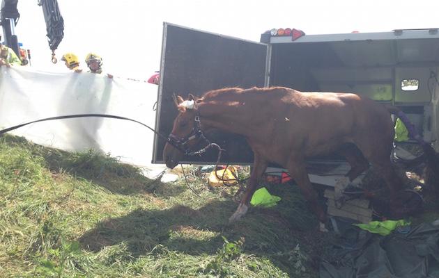 M5 horse trailer crash