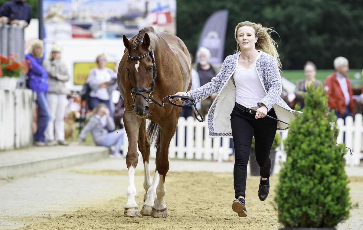 Luhmuhlen trot-up Libby Seed What A Catch