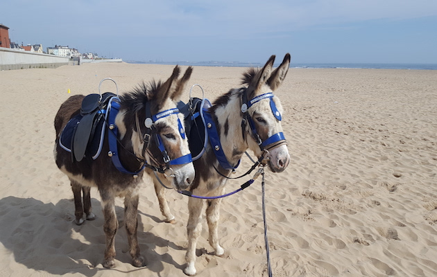 donkeys seaton carew