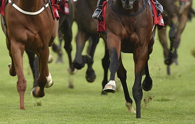 Great Yarmouth wrong horse