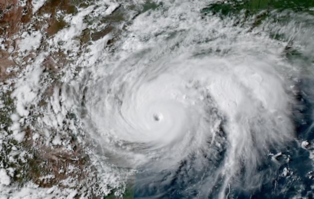Hurricane Harvey horse rescue