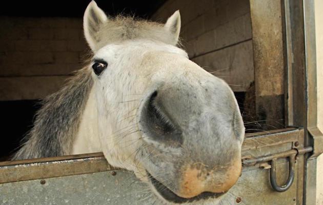 horse crisis