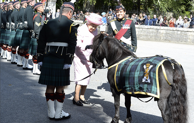 Flower Stealing Shetland Reunited With The Queen Horse Amp Hound