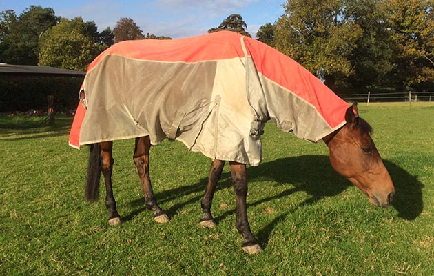A Fly Rug For All Weathers And It S Curly On Review Horse Hound