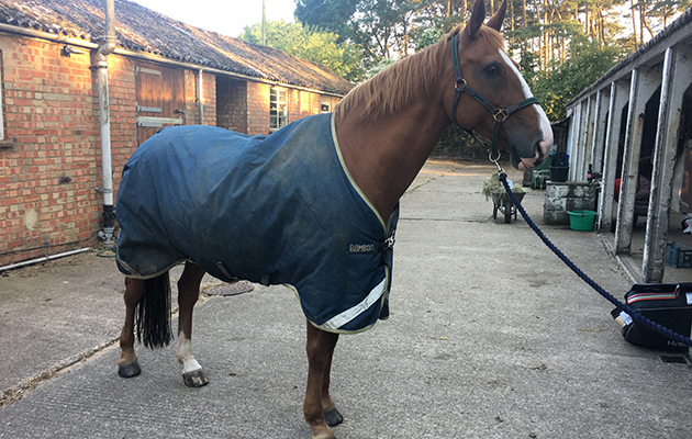 Our Reviewer Could Not Sing The Praises Of This Versatile Turnout Rug Enough