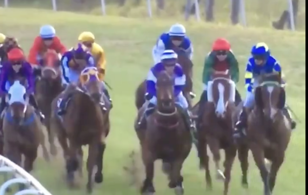 broken bridle racehorse