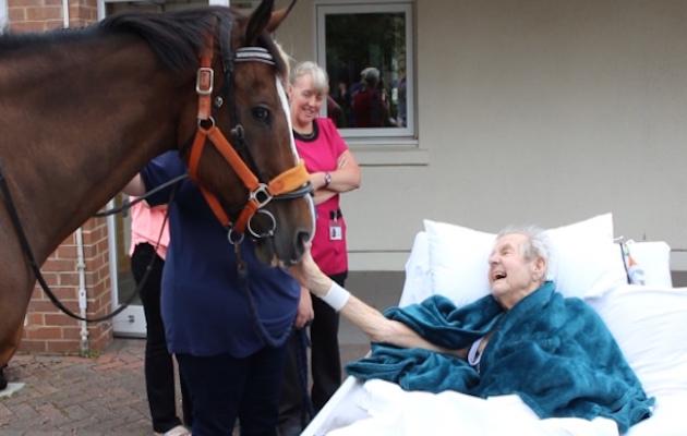 horse hospice visit