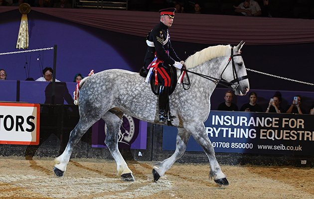 HALES HECTOR owned by David Curtis ridden or exhibited by Jamie Bradbury in the Heavy Horse Championship during the Horse of the Year Show at the NEC near Birmingham, UK between 4th - 8th October 2017