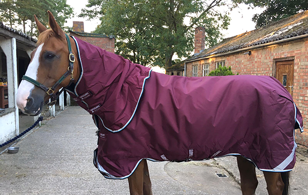 Our Reviewer Thought This Turnout Rug Was Second To None And Couldn T Recommend It Highly Enough