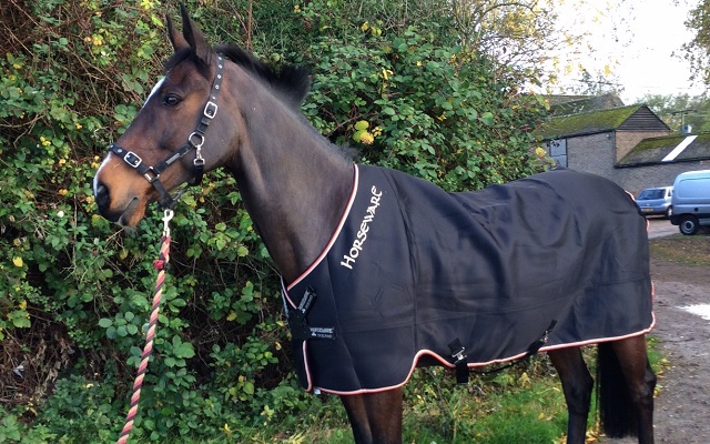 A Stylish Cooler Rug Your Horse Will