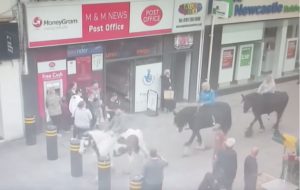 Northumbria Police appeal horses Newcastle city centre
