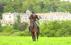 Martin Whitley Godolphin's former racehorse Caymans falconry