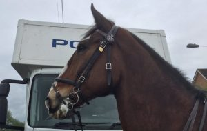 connor west yorkshire police horse