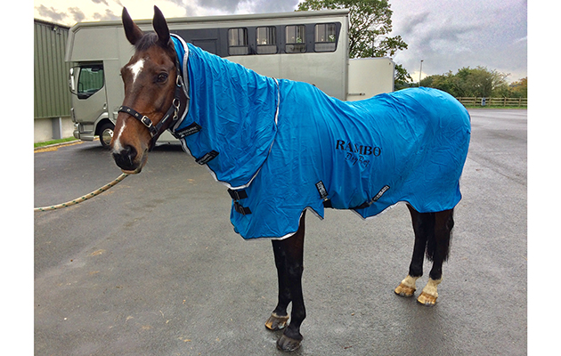A Well Designed Rug That Dries Your Horse Ultra Quickly Review Hound