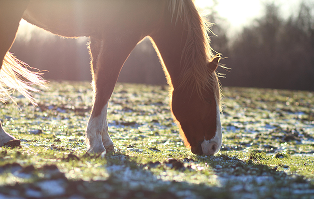 EBFKWX A beautiful Horse in early evening frost grass
