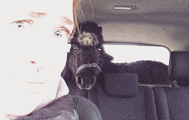 Shetland pony car