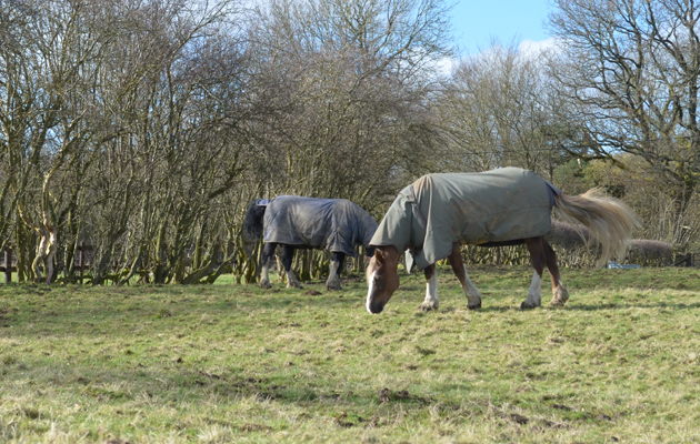 horses grazing in turnout rugs