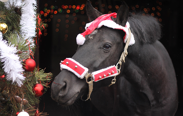 Christmas Horse Pictures.12 Questions All Horse People Ask Themselves As Christmas