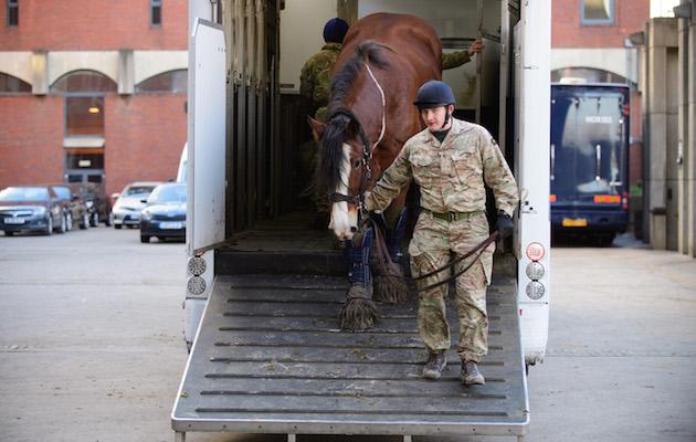 muddy cavalry horses
