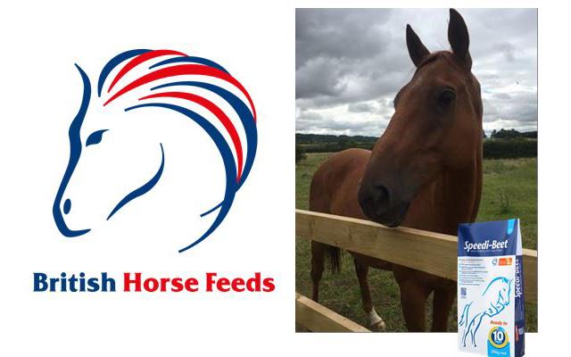 British-Horse-Feeds-Feature-Image