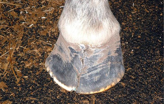 hoof cracks