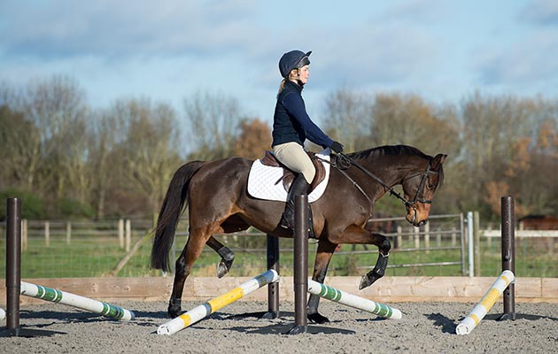 Physio exercise for horses Hayley Marsh Training Feature - Malvern, UNited Kingdom - 28 November 2017