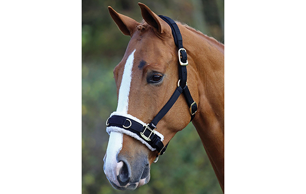Horse Pony Equestrian Non Slip Comfort Training Aid HKM Leather Lunge Roller