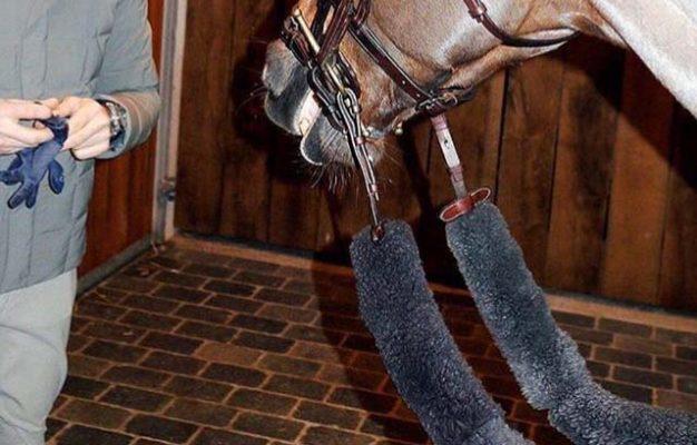 Reins for horses flat zopf