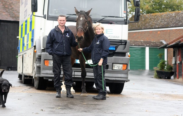 Dexter Thames Valley Police horse