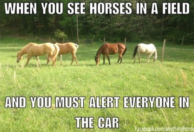 21 of our favourite horse memes of all time - Horse & Hound
