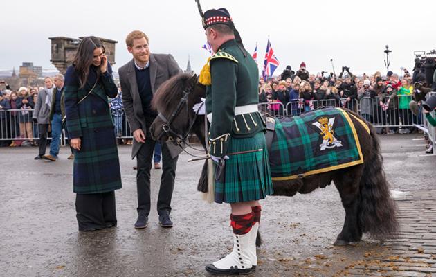 prince harry shetland