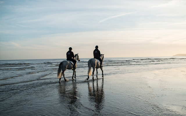 Will uses the nearby beach to give his horses a change of scenery and help them stay fresh
