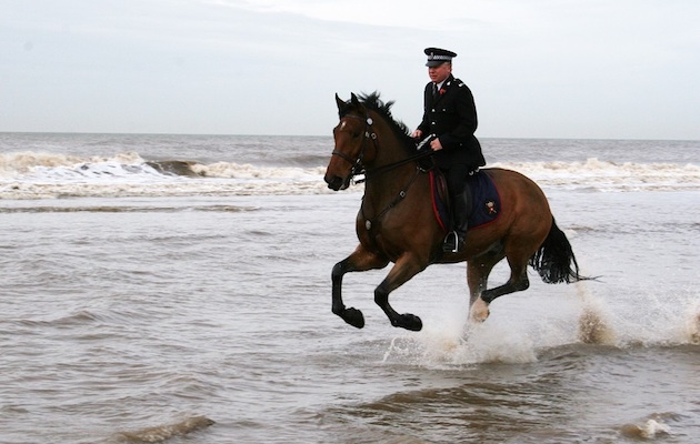 police horse Caton