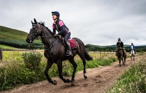 GE7DXN Strip End, Camptown, Jedburgh, Scottish Borders, UK. 22nd July 2016. Horses and ponies enjoy a gallop on the all weather gallops