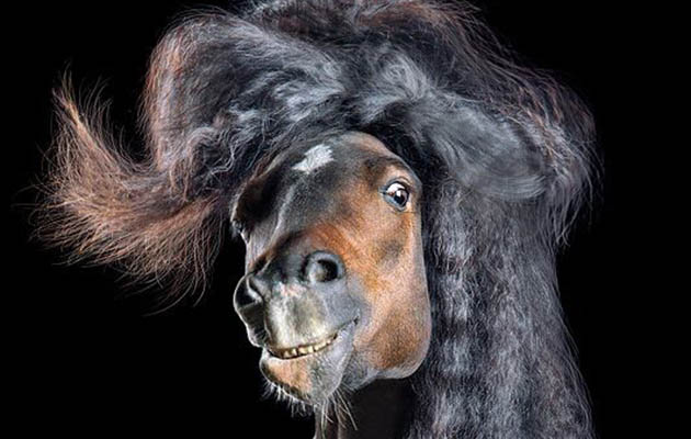 Because I'm worth it: horses and ponies strike a pose in hilarious photo collection
