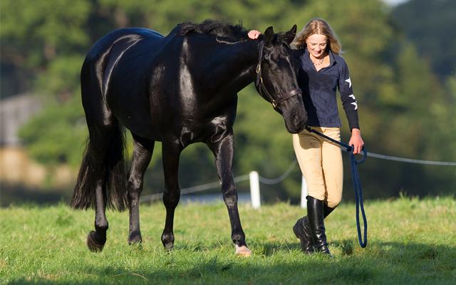 Keep-your-horse-walking_KBIS