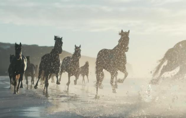Lloyds Bank advert horses