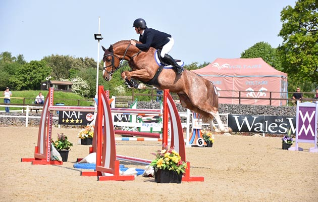 Talented young jumping stallion Escape Z