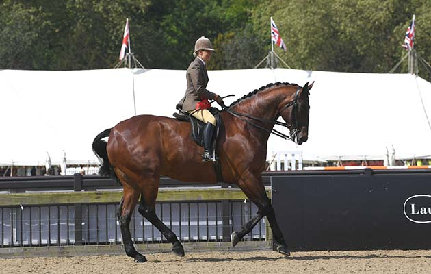 Isle Bright EXHIBITED by Danielle Heath winner of the Novice Hunter during the Royal Windsor Horse Show private grounds of Windsor Castle, in Windsor in the county of Berkshire, UK on 09th May 2018