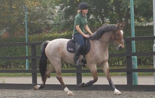 Is your horse in pain? New videos explain the key signs