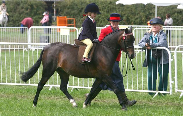 303 Colne Heiress ridden by Kizzie Rose Lucas Leid Rein Pony